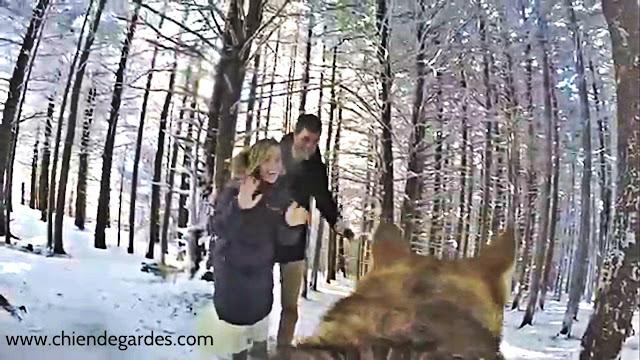 Un Husky sibérien filme le mariage de ses propriétaires avec une GO Pro
