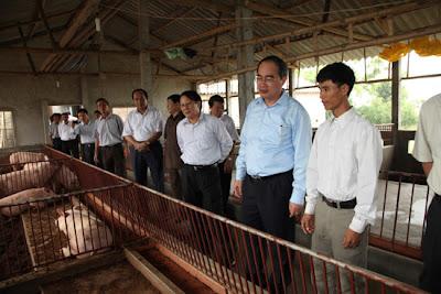 Phó Thủ tướng Nguyễn Thiện Nhân thăm mô hình nuôi lợn bằng ĐLSH tại xã Vũ Bản huyện Bình Lục, Hà Nam, tháng 6/2012. Ảnh: VGP/Từ Lương
