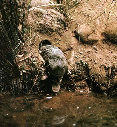 C 243 mo es el clima en tasmania
