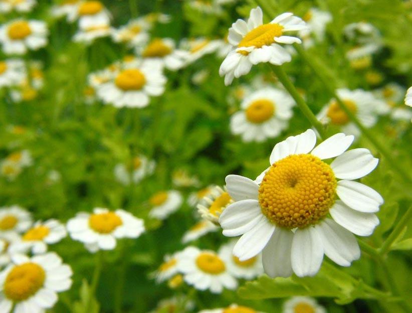 la flor tipos: