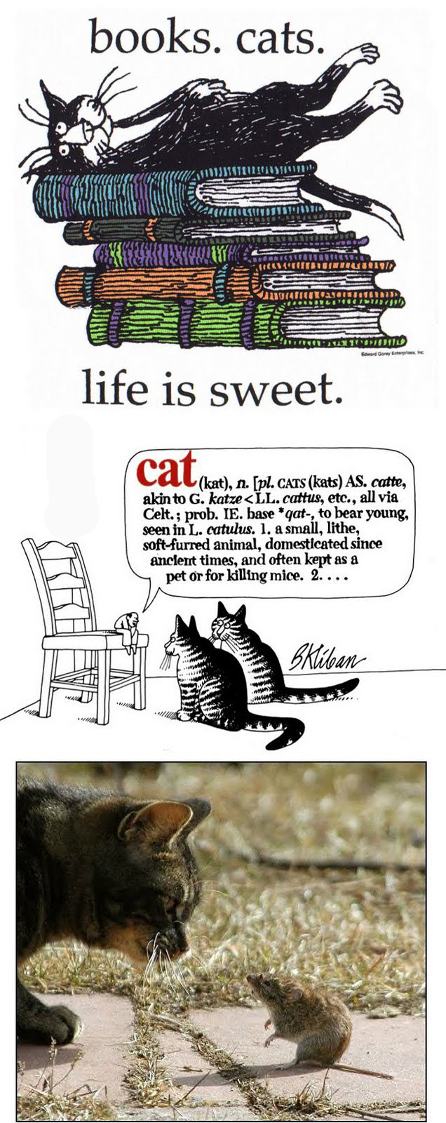 I adore cats but I'm allergic. Well, you can't have everything..