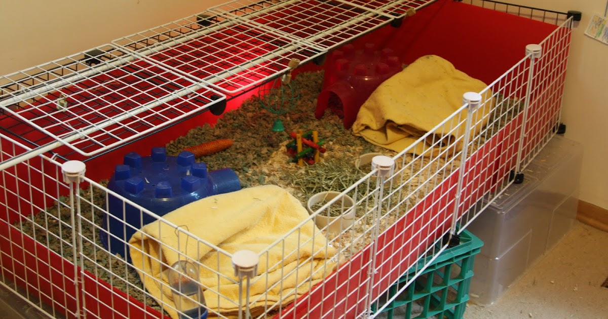 Kibbles 39 n knits diy guinea pig cage for Build your own guinea pig cage