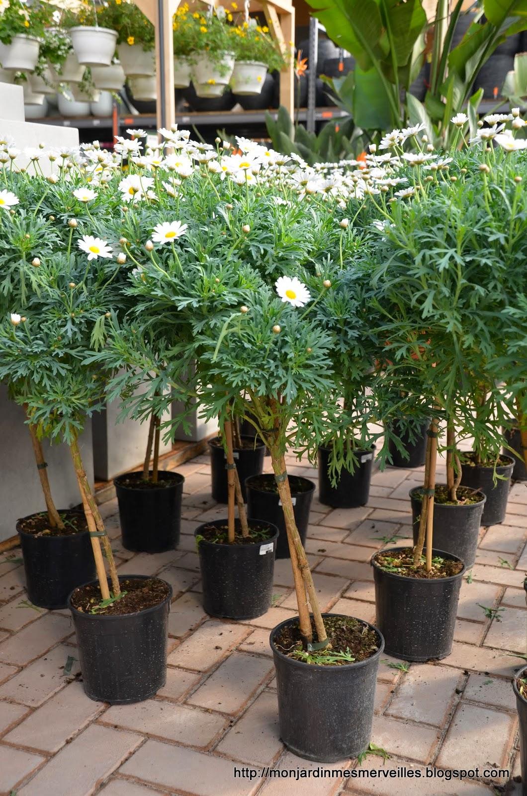 mon jardin mes merveilles ouverture de famiflora 2 5 des annuelles et des vivaces. Black Bedroom Furniture Sets. Home Design Ideas