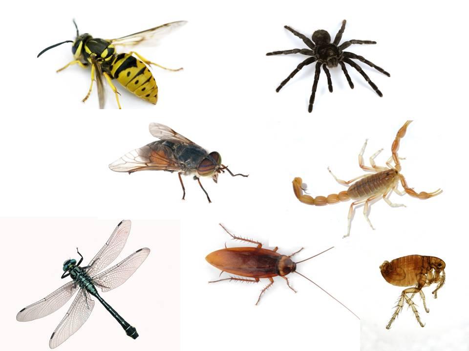 3 tema libre los animales mary4a elena for Insectos del jardin