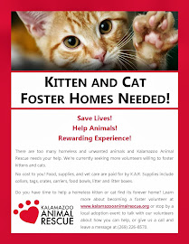 Kitten and Cat Foster Homes Needed
