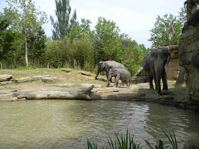 pictures of elephants, image
