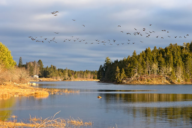 Nova Scotia; Inlet; Birds