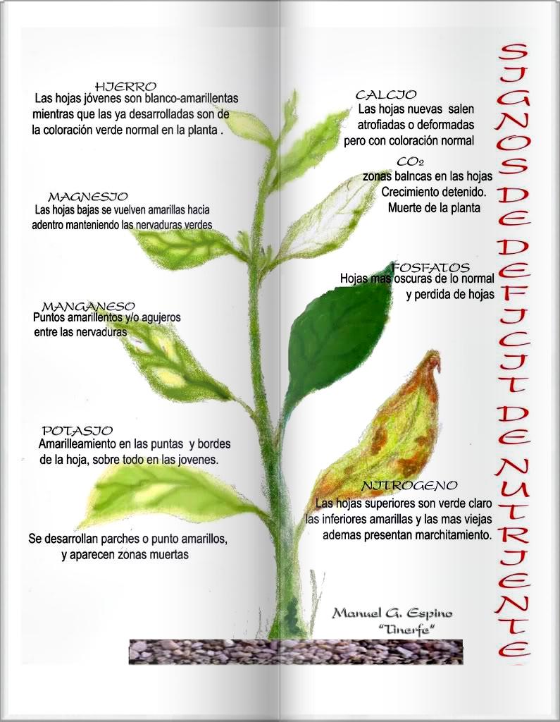 Falta o exceso de nutrientes fertilizaci n y sustrato for Potasio para plantas