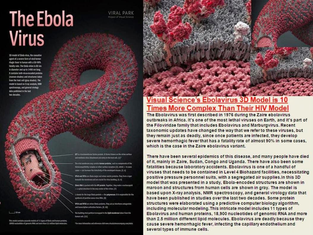 the mystery of the ebola hemorrhagic fever Webmd explains the latest info on the rare but deadly disease ebola, including how it's sudden fever, feeling tired, muscle ebola virus infection in this.