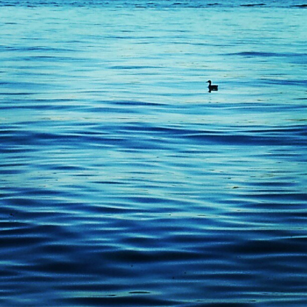 instagram photo image lake duck waves blue prior lake minnesota beautiful