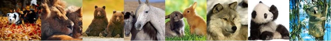 Cabeçario animais