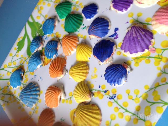 разноцветные ракушки