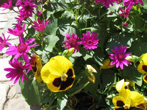 Kukka-asetelma aniliini ja keltainen