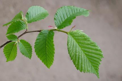 Метки ботаника деревья