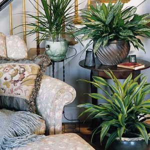 3 ways houseplants can change your winter