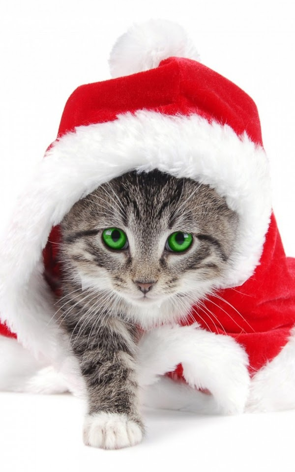 Christmas Grey Santa Claus Cat  Galaxy Note HD Wallpaper