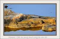 Crocodile Sun-bathing, Ranthambore, Rajasthan, India