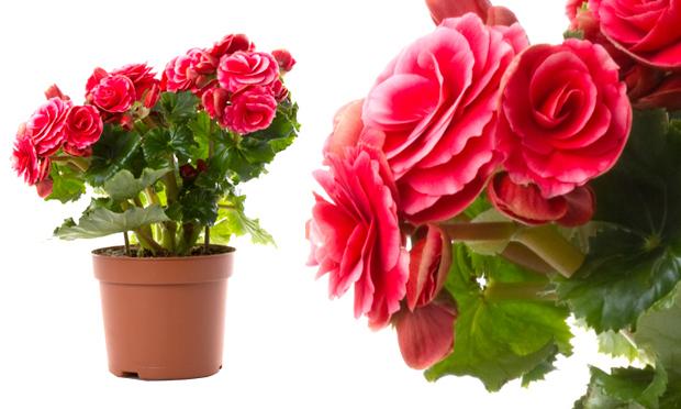 plantas jardins internos:New Garden Service: A natureza em seu apartamento