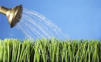Vai trò của nước đối với cây trồng