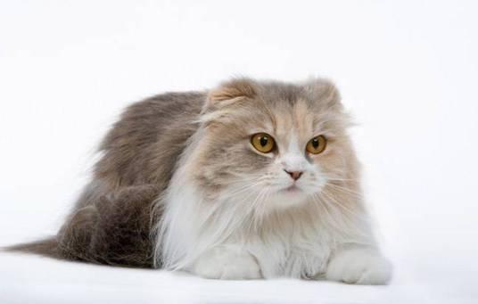 les-chats-de-l-... Chats