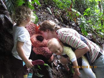 Rafflesia berbau bangkai