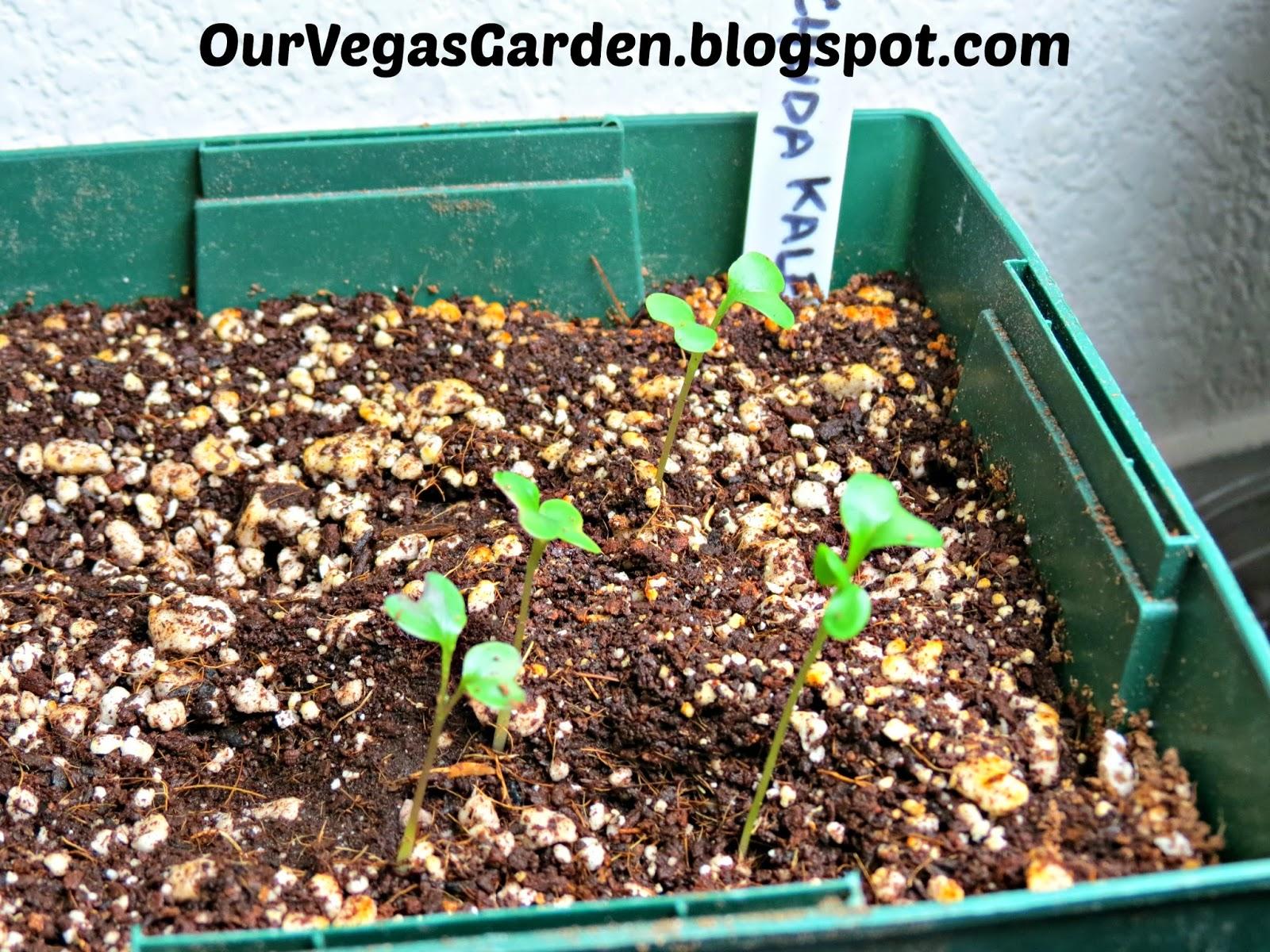 desert organic farming organic indoor garden potted plants end
