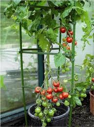 DIY Tomato Cage Topiaries via Curb Alert! blog http://tamicurbalert.blogspot.com