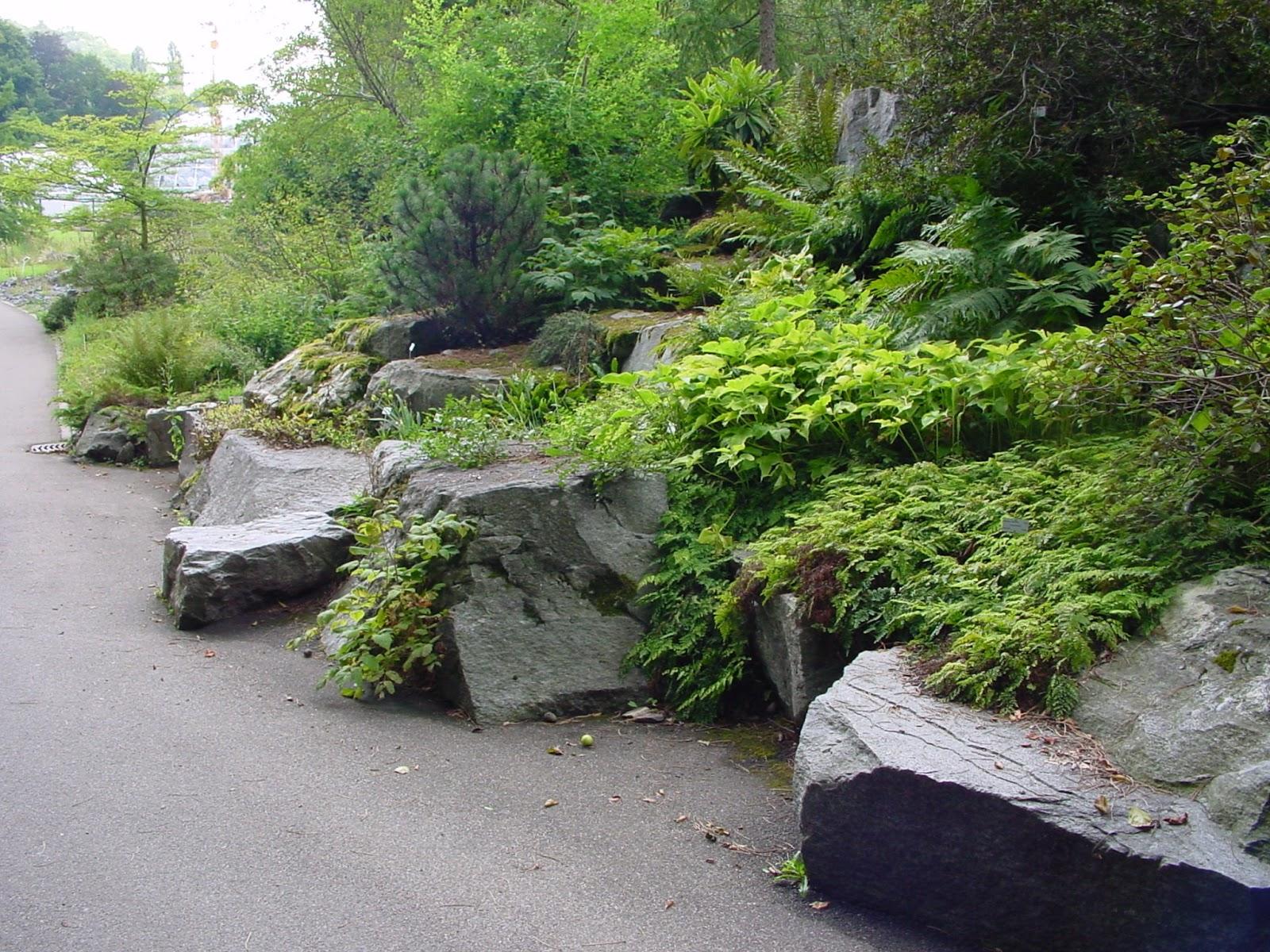 Jardineria eladio nonay jard n de rocas jardiner a - Rocas para jardin ...