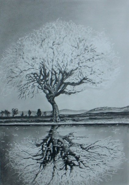 kristin wolfson  tree with reflection drawing  graphite on