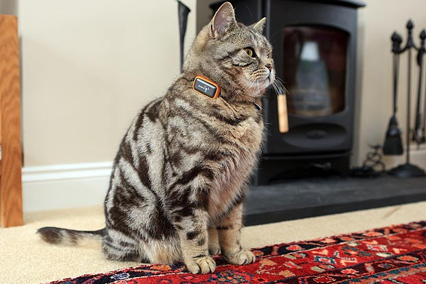Cat Lucky Gps Cat Tracking Collars Can Be Hard To Find