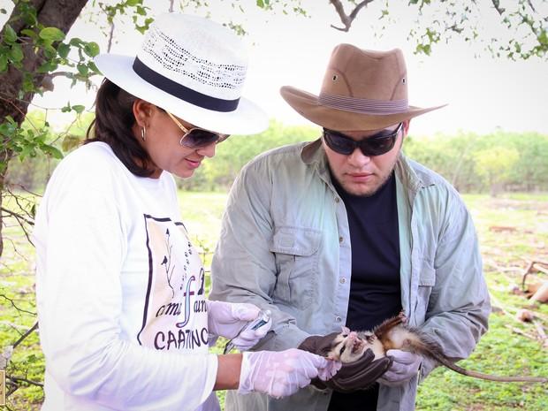 Captura e avaliação de animais (Foto: Divulgação/Wesley Lopes)