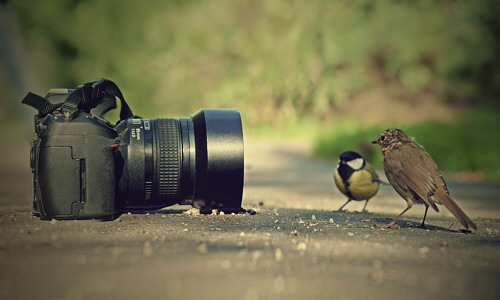 QUI LE VOSTRE FOTO E IMMAGINI