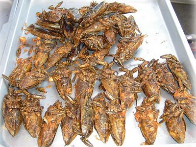 Top 11 Delicious Insects That We Can Eat