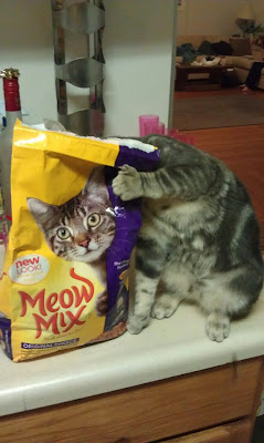 cat hiding behind food