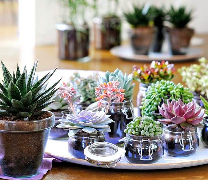 Diy centros de mesa con cactus y suculentas tr s studio for Suculentas por mayor