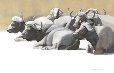 Federico Gemma - Wildlife Artist: Cape buffalos resting, Ngorongoro