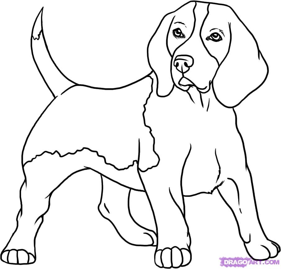 coloriage beagle adulte