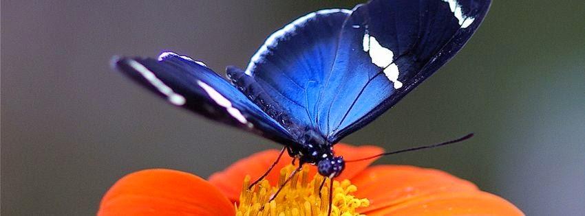 Couverture pour journal facebook papillon