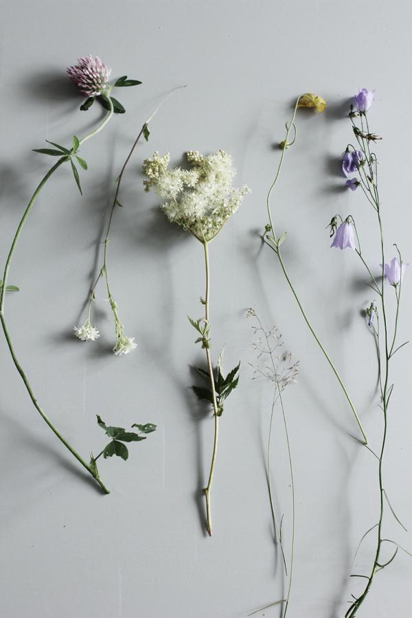 ängsblomma, ängsblommor, blomma, blommor, äng, sommarblomma, sommarblommor,