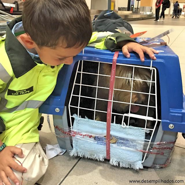 Dicas de como viajar com animais de estimação, cachorros, internacional. Da Colômbia para o Peru.