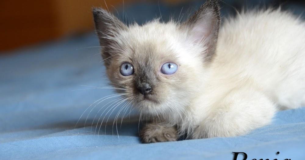 Adopta peludos perros y gatos en adopcion adoptados - Gatitos de un mes ...