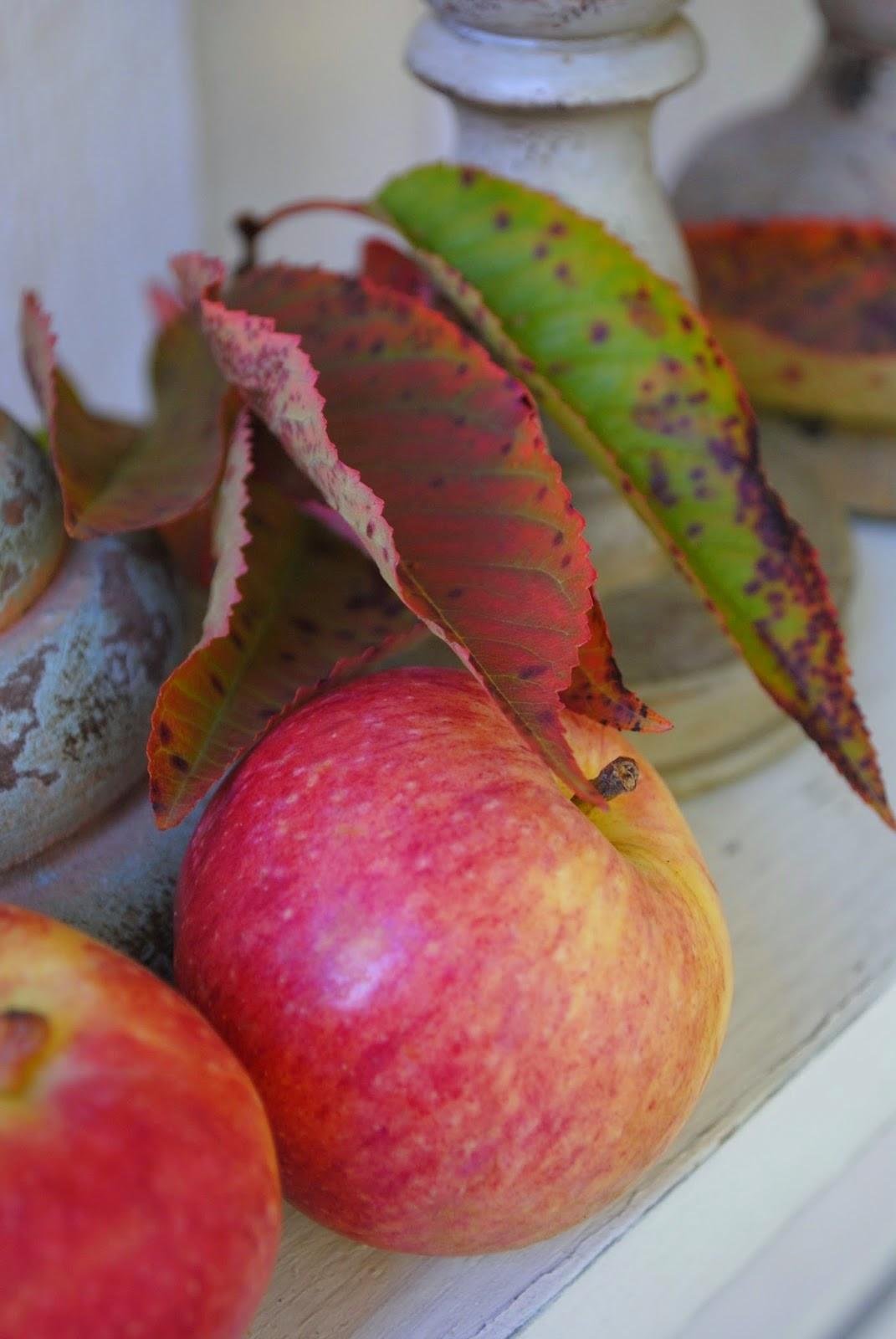 Epler til pynt