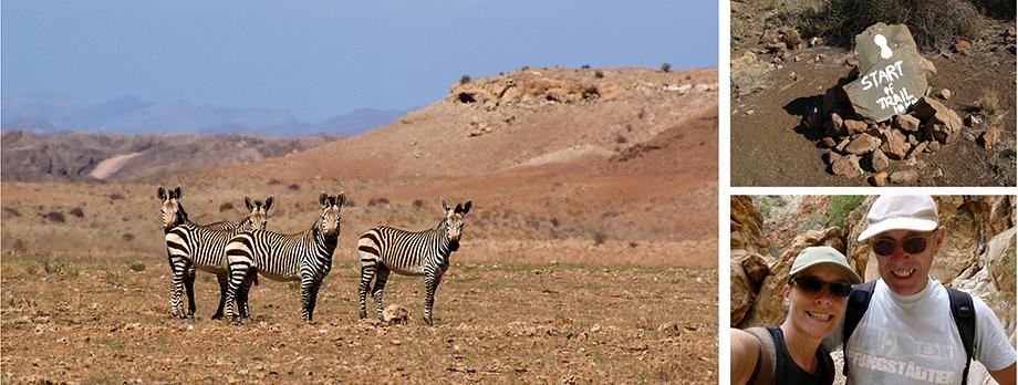 Ynas Reise Blog | Hartmann Bergzebras in den Tirasbergen | Namibia