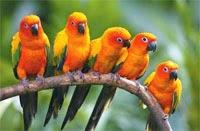 Parrots Find Home In Venezuelan Capital