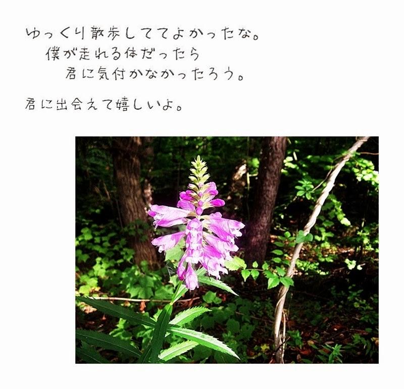 出合った花