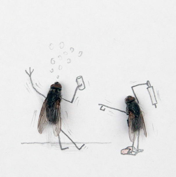 Creative Photos Of Dead Flies By Magnus Muhr