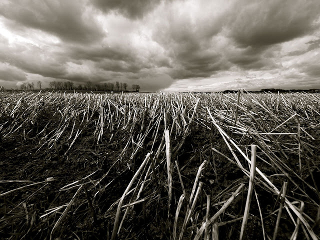 Black And White Cloudy Farm Picture