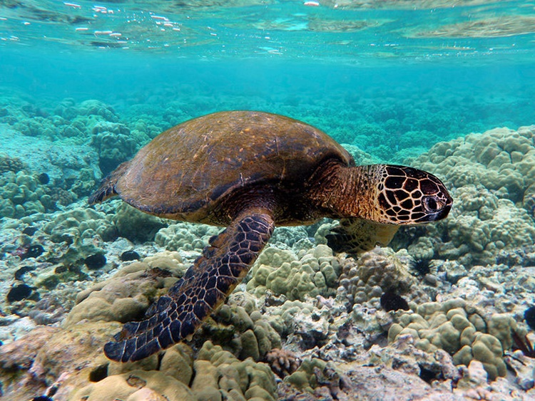 Green Turtle Animals Wallpapers