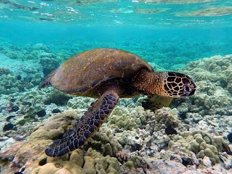 #5 Turtle Wallpaper