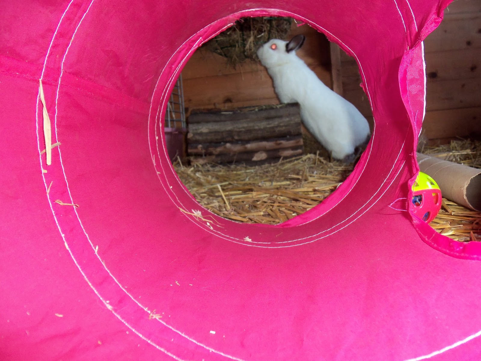 how to stop rabbits chewing their hutch